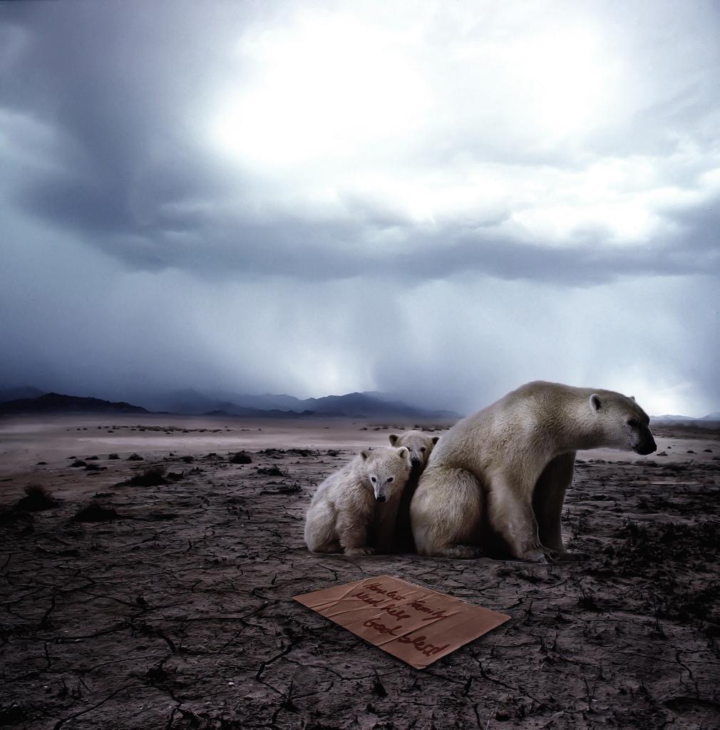 homeless-polar-bears